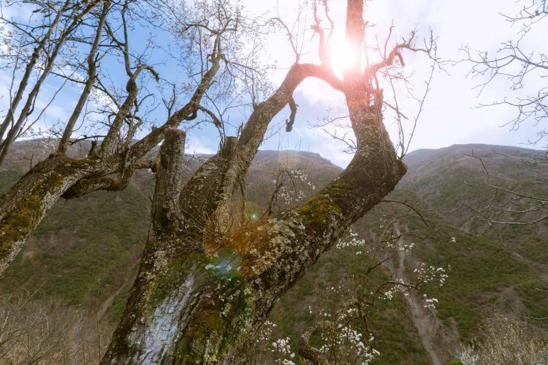 树干为什么是圆的?大自然优胜劣汰的原因