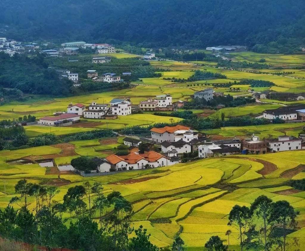 征收农村集体土地征收程序,每一步都至关重要!