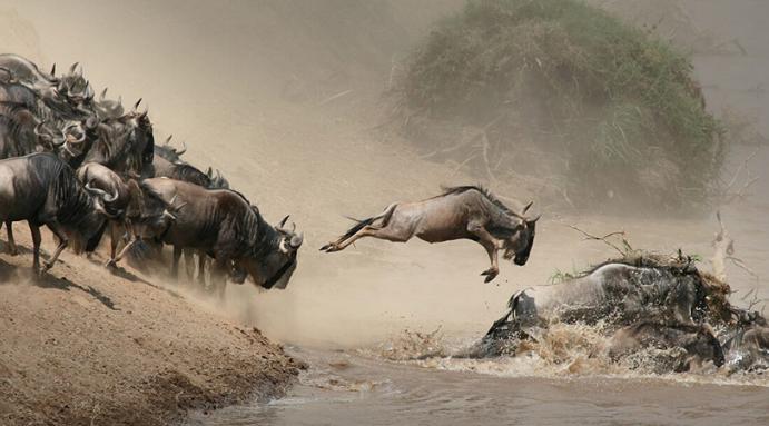 非洲动物大迁徙啥时候?来坦桑尼亚吧,正当时!