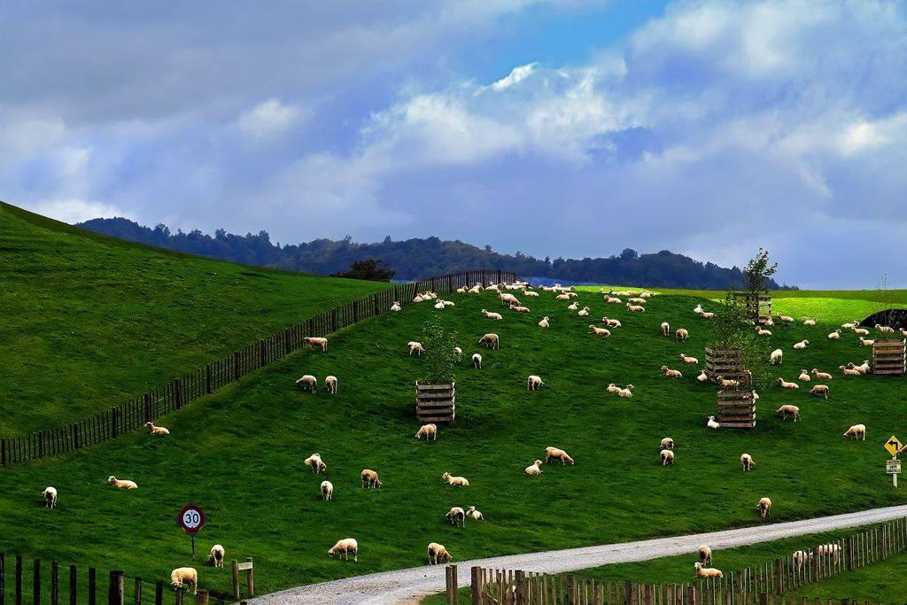 新西兰要开征外国游客税了,每人需缴纳35新西兰元